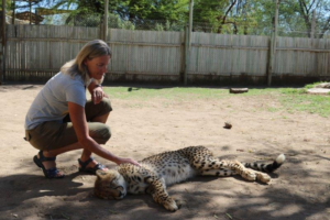 Janelle Miller writes: We were in a wildlife preserve in South Africa & got passes for access to their cheetah. We were told how to act & where to position ourselves while with her. It was amazing! 2018