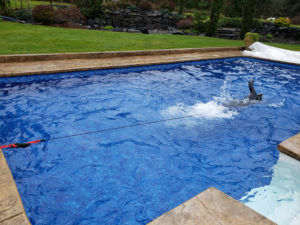 SOMA swimmer Rick Howell - Backyard swimming with bungy cords
