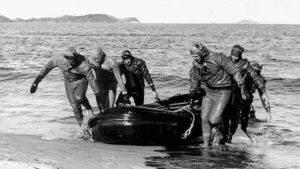 An underwater demolition team of the U.S. Navy pulling a rubber boat ashore atWŏnsan, North Korea, during a mis- sion to clear a minefield, October 1950. --U.S. Navy